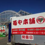 予約なしでいちご狩り!田原市にある苺や本舗。車椅子可能でトイレも完備