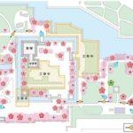 2020名古屋城桜まつり見頃はいつ?ライトアップ期間・屋台・トイレ・駐車場まとめ