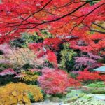 【愛知県ライトアップ紅葉2020】見頃やライトアップ時間、駐車場やアクセス、屋台まとめ